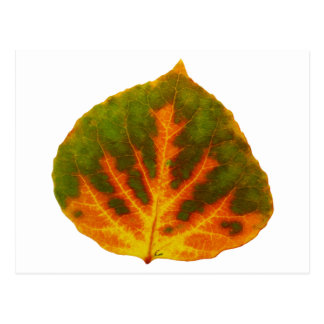 Green Orange & Yellow Aspen Leaf #1 Postcard