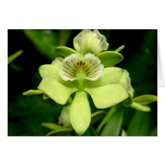 Green Orchid Card