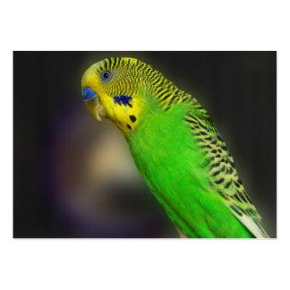 Green Parakeet ACEO Art Trading Cards Business Card Template