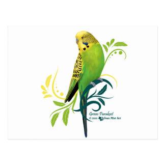 Green Parakeet Postcard