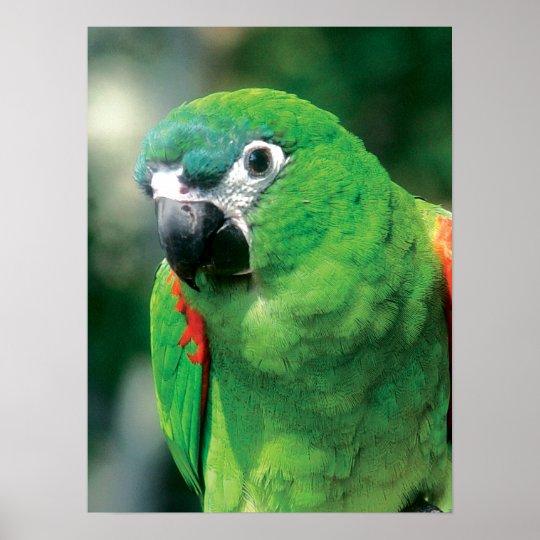 Green Parrot Bird Poster Print