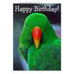 Green parrot birthday greeting card