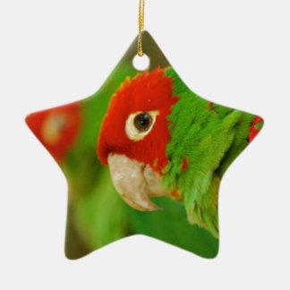 Green parrot ceramic star decoration