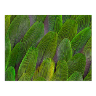 Green Parrot Feathers Close Up Postcard