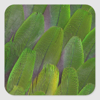Green Parrot Feathers Close Up Square Sticker