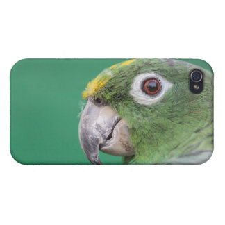 Green Parrot iPhone 4/4S Case
