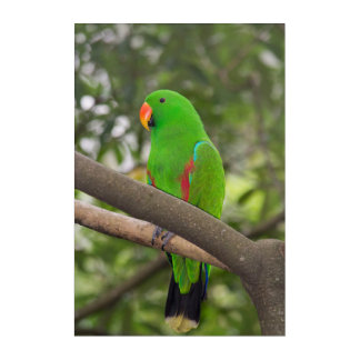 Green Parrot Portrait Acrylic Wall Art