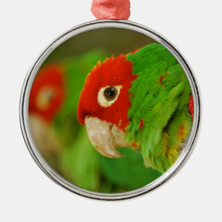 Green parrot Silver-Colored round decoration
