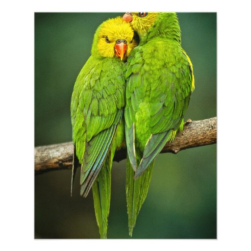 Green Parrots Love Birds Photography Full Color Flyer