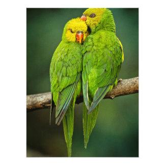 Green Parrots Love Birds Photography Photo
