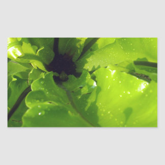 Green_Passion_Drops _ Rectangular Stickers