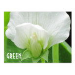 GREEN Pea Blossom custom template postcard