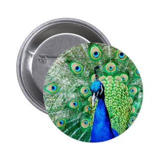 Green Peacock 6 Cm Round Badge