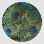 Green Peacock Feather Round Stickers