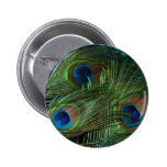 Green Peacock Feathers Button
