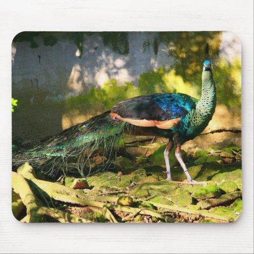 Green Peafowl, Pavo muticus imperator Mousepads