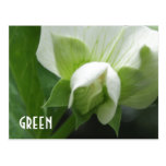 GREEN peas Pea Blossom custom template postcard