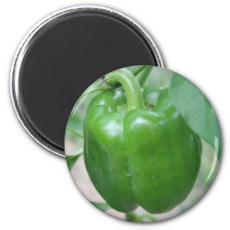 Green Pepper Magnet
