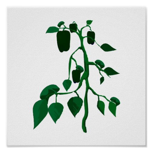 Green peppers on green plant graphic poster
