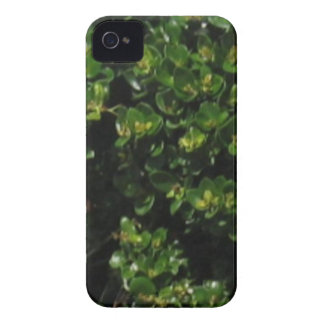 Green Plant iPhone 4 Cover