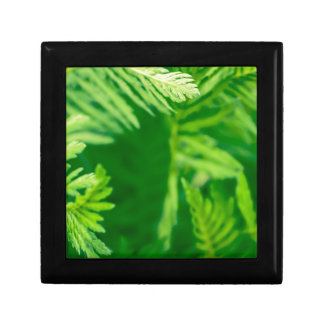 Green plant gift box