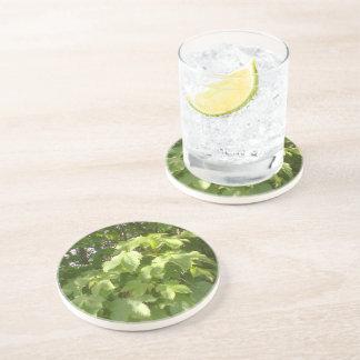 Green plant leafs coaster