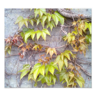 Green plant on a stone wall photograph