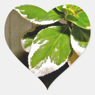 Green PlantDSCF7869.JPG Sticker