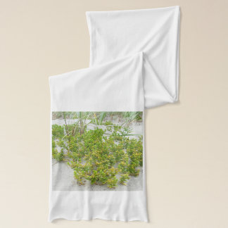 Green plants at the beach american apparel sheer scarf