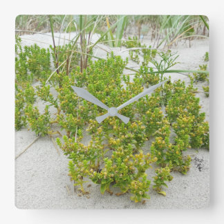 Green plants at the beach square wall clock
