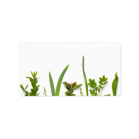 Green Plants Isolated on White Background Label