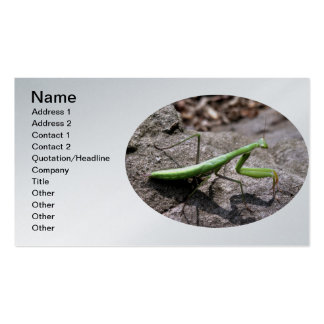 Green Preying Mantis on a Rock Pack Of Standard Business Cards