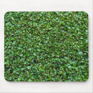 Green Privet Hedge Mouse Pad