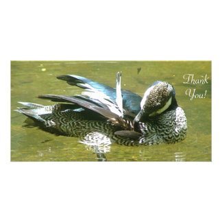 Green Pygmy Goose Scratching Photo Card