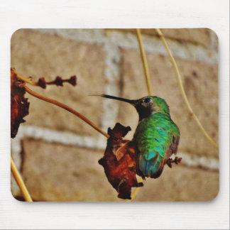 green ruby hummingbird mousepad
