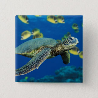 Green Sea Turtle 15 Cm Square Badge