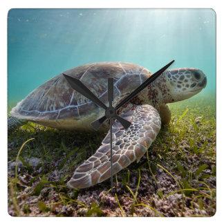 Green Sea Turtle At Dusk | Akumal Bay Clocks
