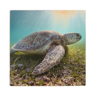 Green Sea Turtle At Dusk   Akumal Bay Maple Wood Coaster