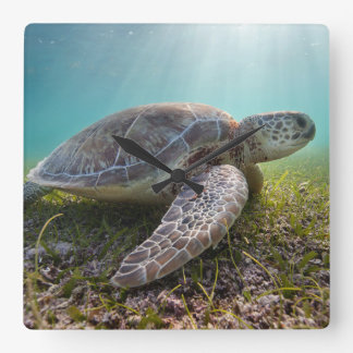 Green Sea Turtle At Dusk | Akumal Bay Square Wall Clock
