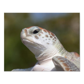 Green Sea Turtle Card