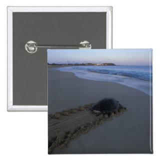 Green Sea Turtle, (Chelonia mydas) female 15 Cm Square Badge