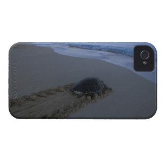 Green Sea Turtle, (Chelonia mydas) female iPhone 4 Cover