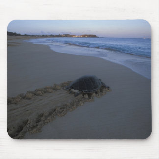 Green Sea Turtle, (Chelonia mydas) female Mouse Mat