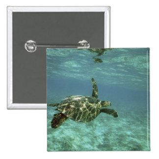 Green Sea Turtle, (Chelonia mydas), Kona Coast, 15 Cm Square Badge