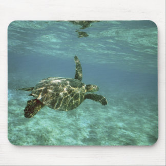 Green Sea Turtle, (Chelonia mydas), Kona Coast, Mouse Pad