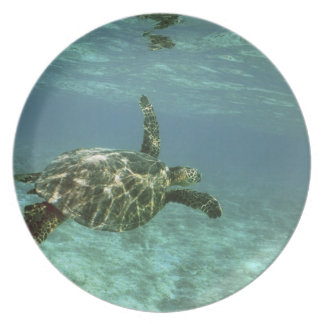 Green Sea Turtle, (Chelonia mydas), Kona Coast, Plate