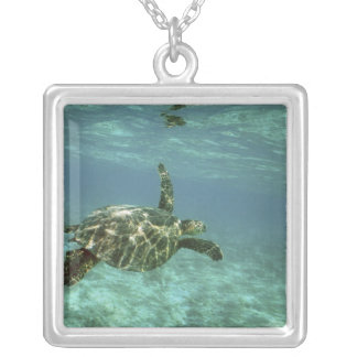 Green Sea Turtle, (Chelonia mydas), Kona Coast, Silver Plated Necklace