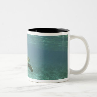 Green Sea Turtle, (Chelonia mydas), Kona Coast, Two-Tone Coffee Mug
