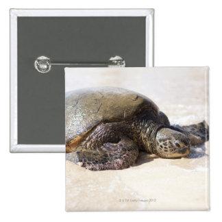 Green sea turtle Chelonia mydas) on the beach in 15 Cm Square Badge