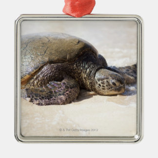 Green sea turtle Chelonia mydas) on the beach in Christmas Ornament